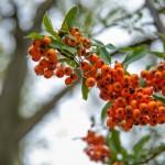 BotanicalGardensbyRachelJones-4095