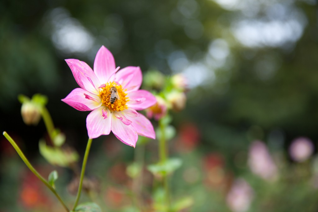 BotanicalGardensbyRachelJones-4134