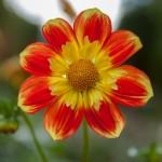 BotanicalGardensbyRachelJones-4143
