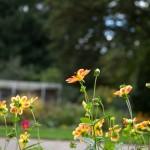 BotanicalGardensbyRachelJones-4145