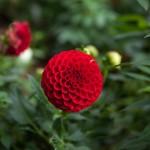 BotanicalGardensbyRachelJones-4158