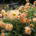 BotanicalGardensbyRachelJones-4165