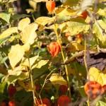 BotanicalGardensbyRachelJones-4192