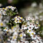 BotanicalGardensbyRachelJones-4203