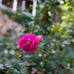 BotanicalGardensbyRachelJones-4227